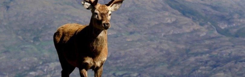 Охота в Англии на оленя часть 1, Видео, Смотреть онлайн